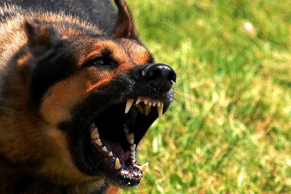 I cani cosa odiano di noi umani?