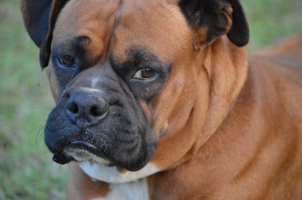 Cosa stressa i cani