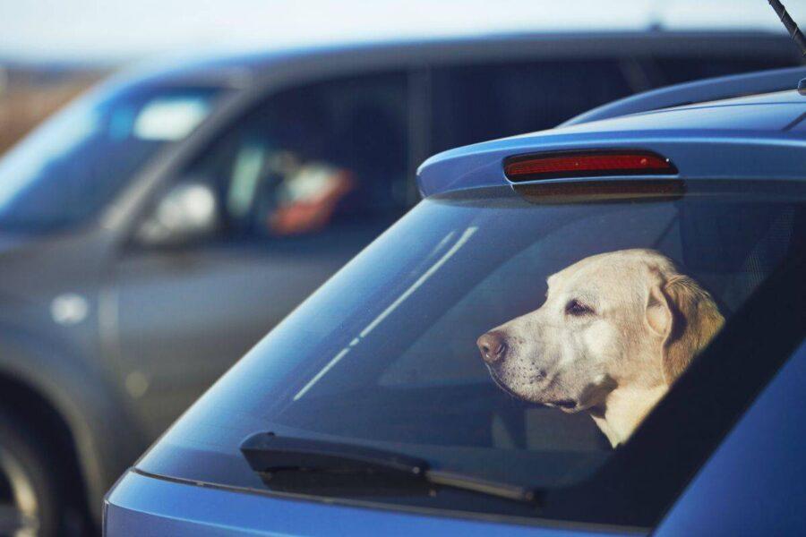 cane lasciato da solo in auto