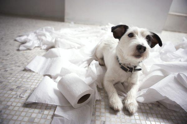 cose inconfessabili che facciamo per il nostro cane