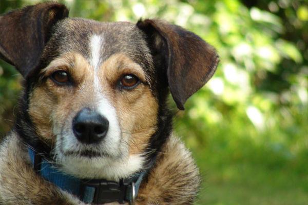 Dermatite del cane: sintomi, cause e cure