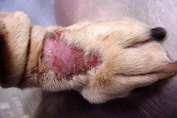 Dermatite zampe cane rimedi naturali, Crosta lattea neonati rimedi naturali - intellicig.ro