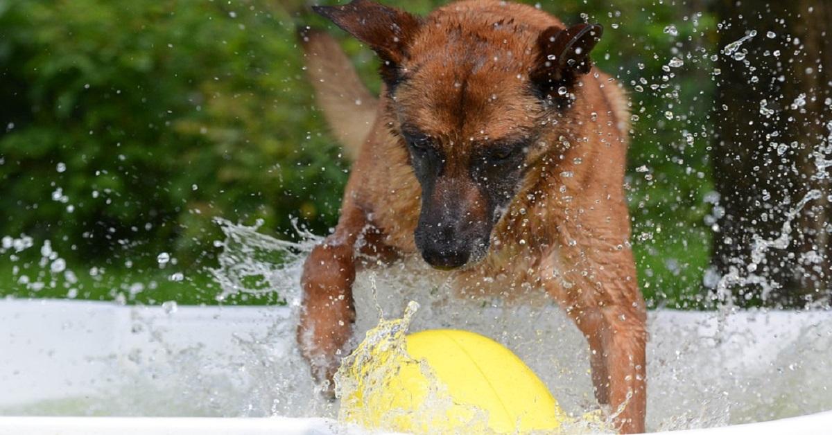Fare il bagno al cane