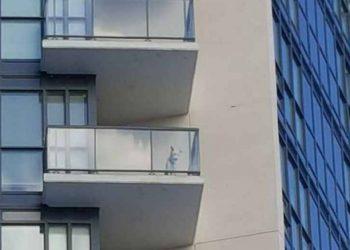 cane terrazzo