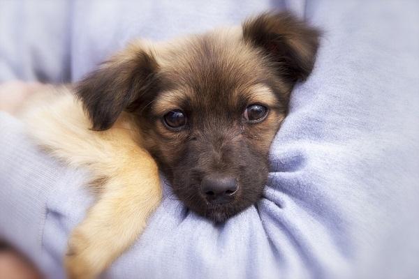 cucciolo di cane che guarda