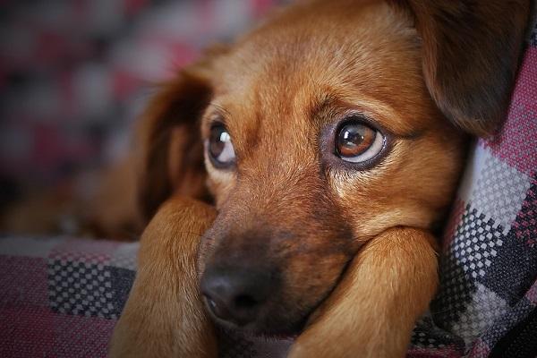I cani possono mangiare la pasta?