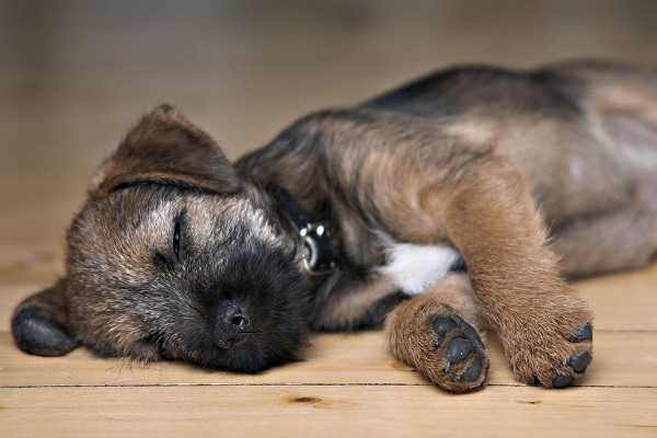I cani sognano come noi umani?