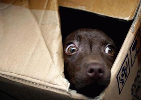 I cani vedono i fantasmi: verità o leggenda?