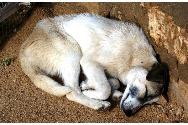 il cane e le posizioni in cui dorme