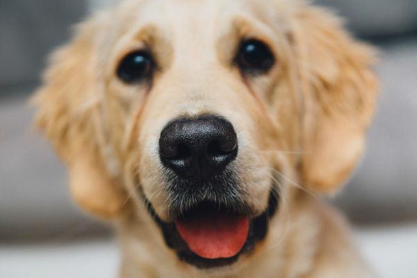 cane con la bocca aperta