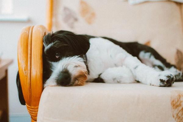 Fosforo alto nel sangue del cane: cosa significa e cosa fare
