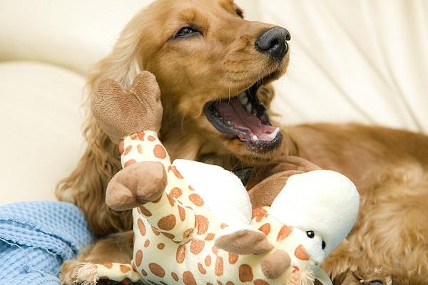 Perché i cani sbadigliano?