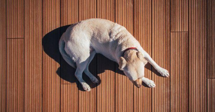 Perché il cane gratta il pavimento