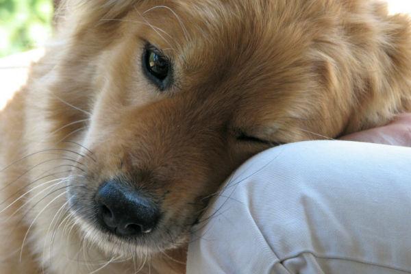 cane che si appoggia sul padrone