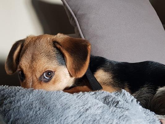 Perché il cane lecca: i motivi più frequenti