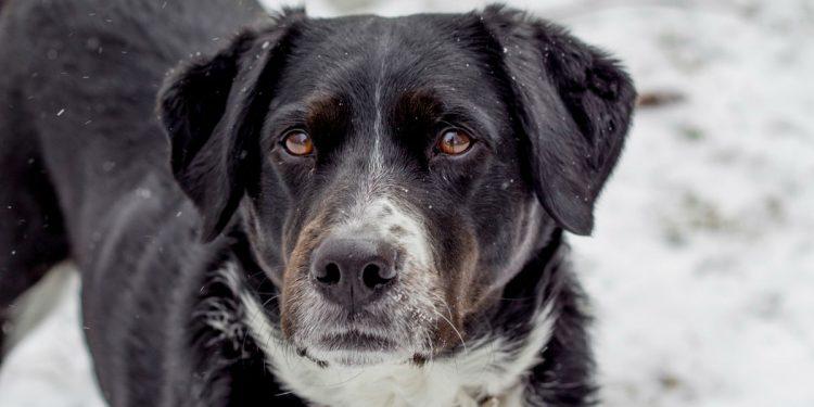 cane nero e bianco con macchie