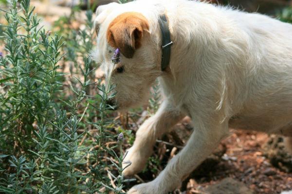 Perché il cane scava?