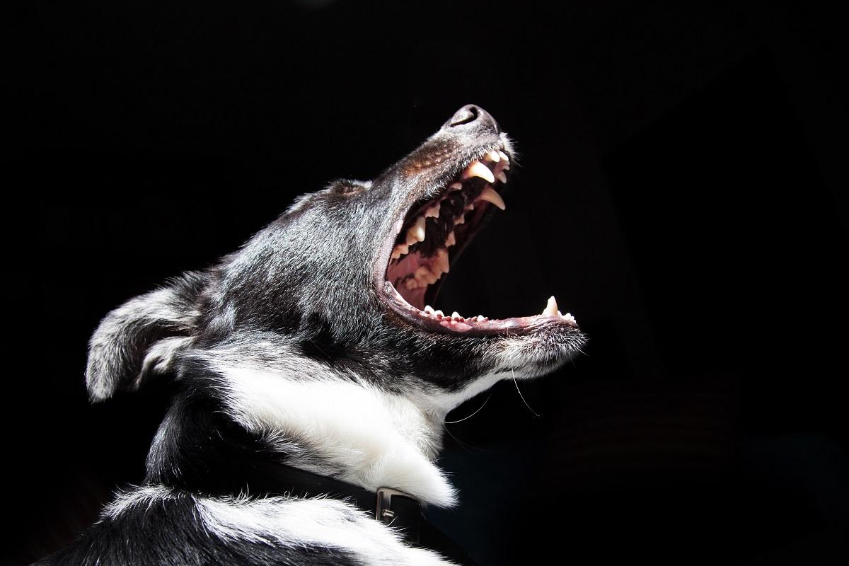 cane che si dispera