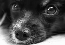 pulire-gli-occhi-del-cane