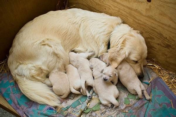 Svezzare i cuccioli di cane: quando e cosa fare
