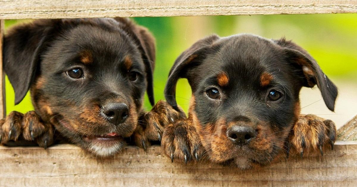 Adozione, quanto costa mantenere un cane: tutte le valutazioni del caso