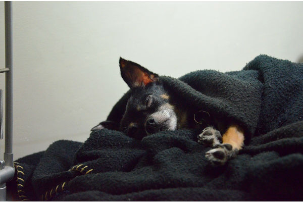 cane che dorme a casa