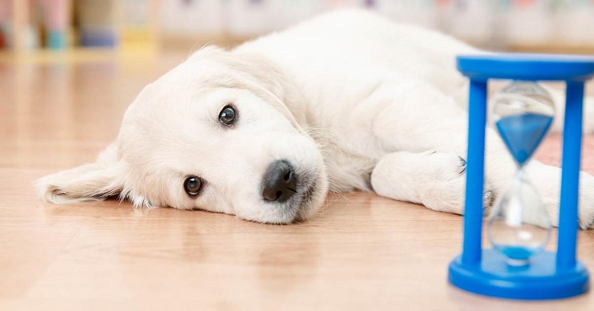 Sguardo colpevole del cane: ecco che cosa significa in realtà
