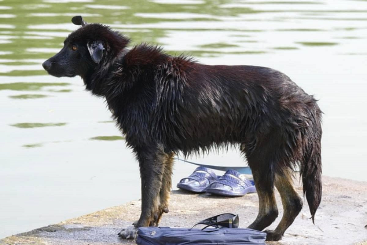 cane dopo una nuotata