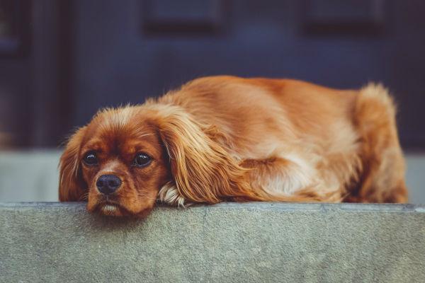 Sindrome della coda morta: come si riconosce?