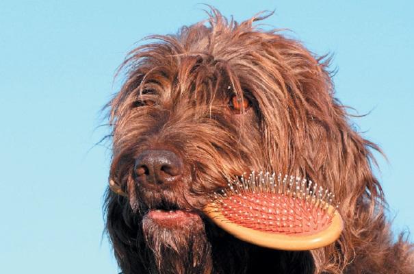 Come spazzolare il pelo del cane