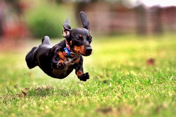 Stress del cane: segnali d'allarme e rimedi