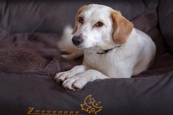 Zampe del cane: come pulirle e curarle