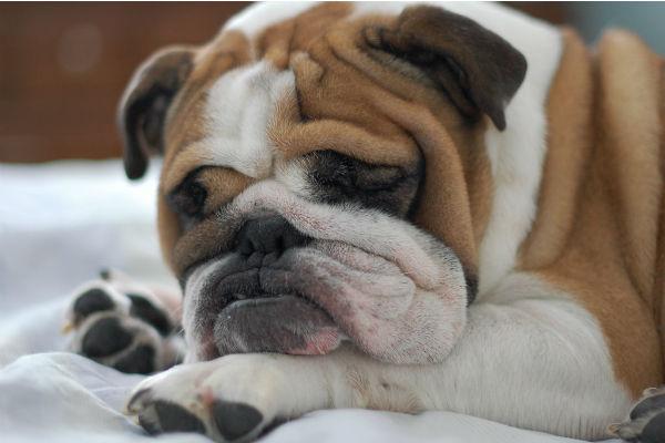 Perché il cane starnutisce?