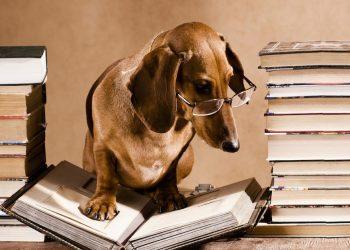 A cosa pensano i cani Una ricerca scientifica svela il mistero