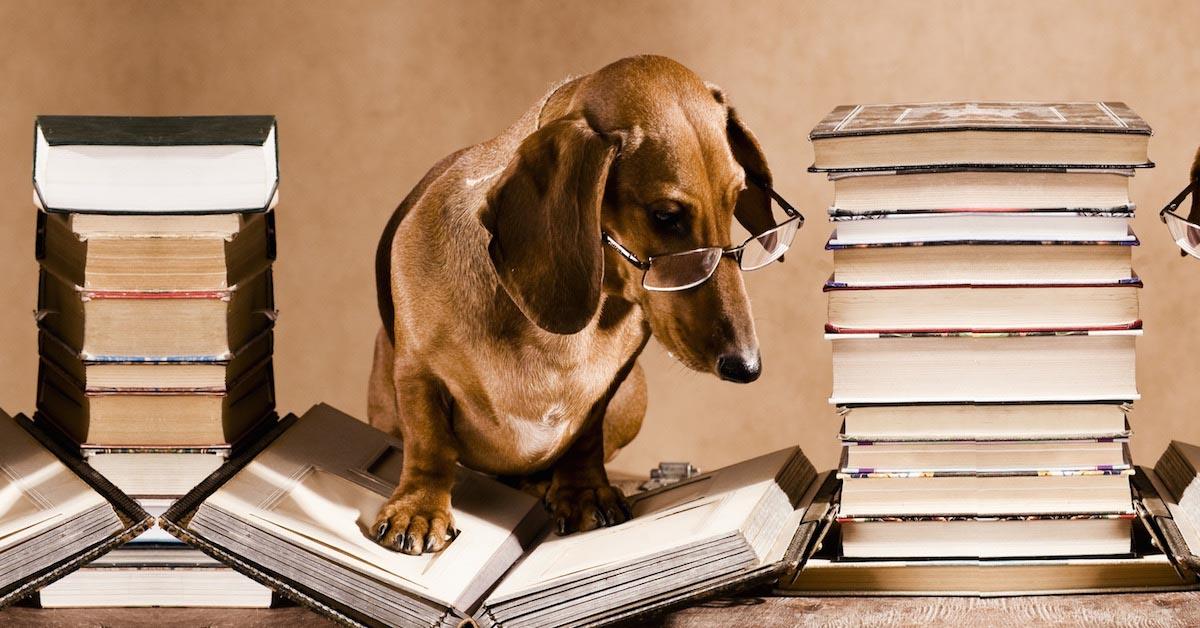 cani e pensiero logico