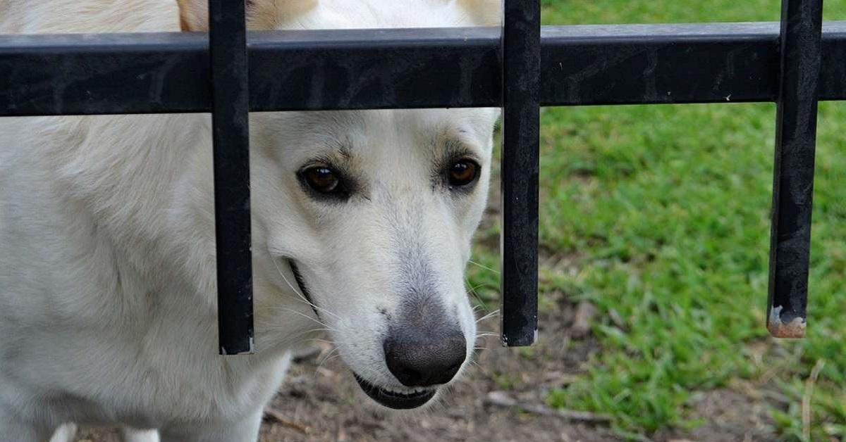 cane dietro cancello