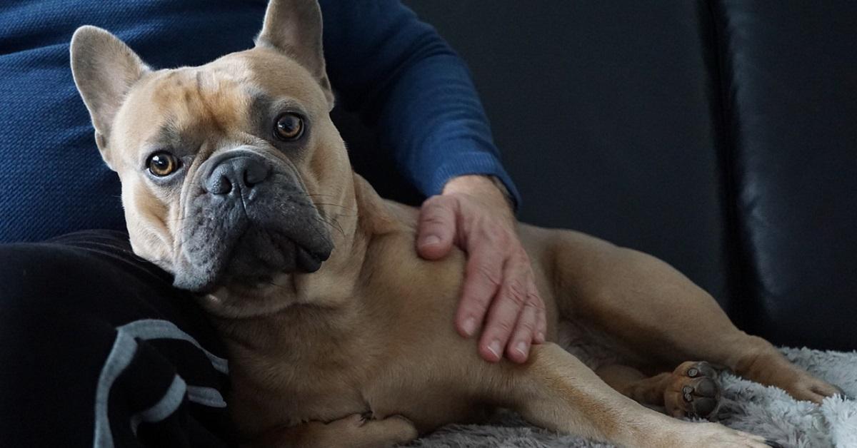 cane accucciato accanto al proprietario