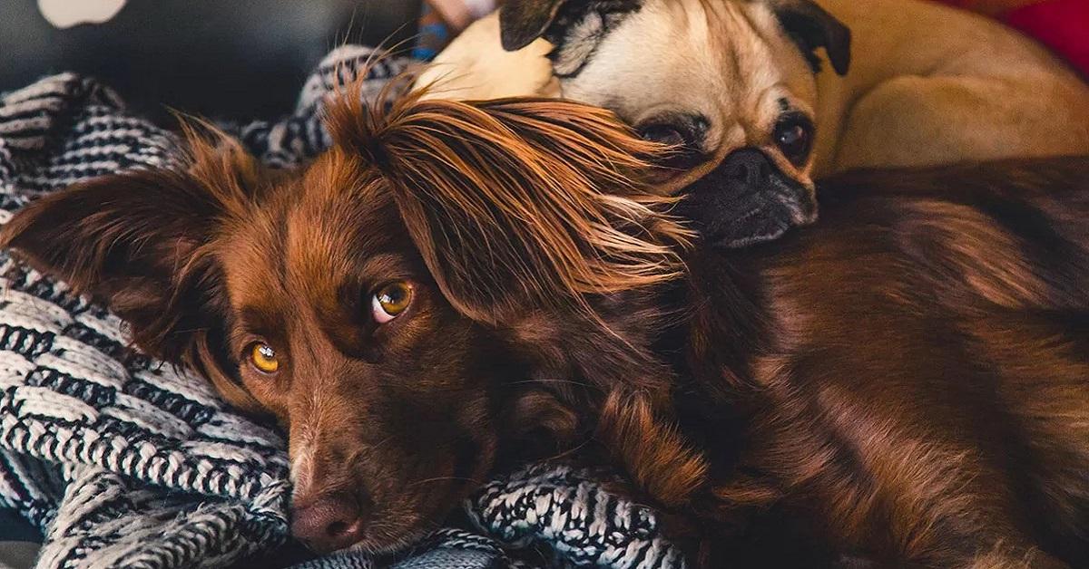 cani distesi sul divano