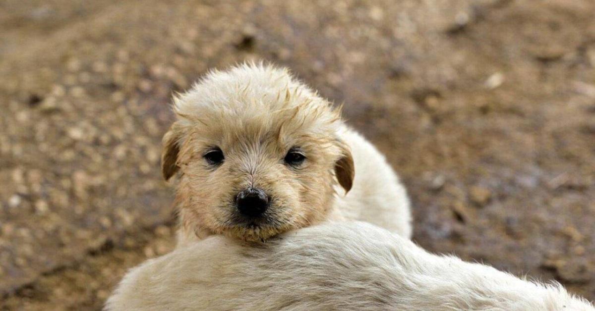 cucciolo di cane sporco