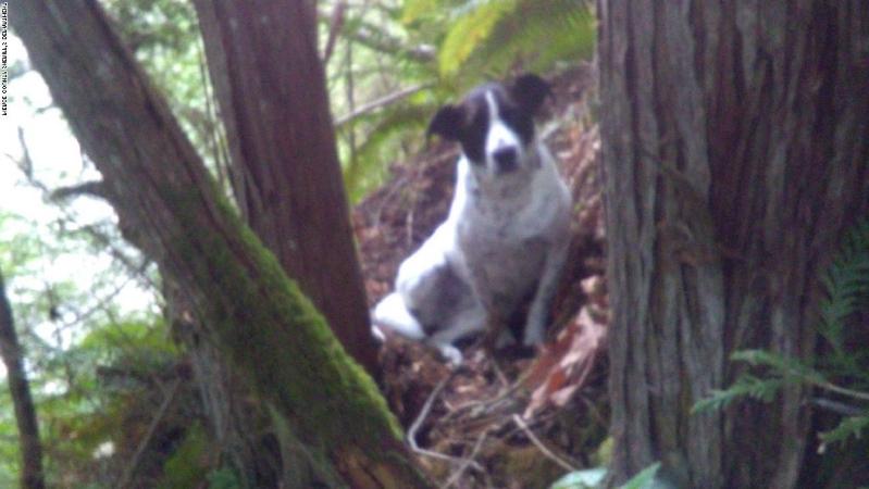 Daisy, il cane che ha vegliato per due giorni sul corpo del padrone defunto