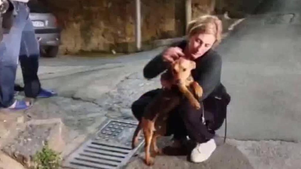 Cane abbandonato su un balcone senza acqua né cibo: il salvataggio