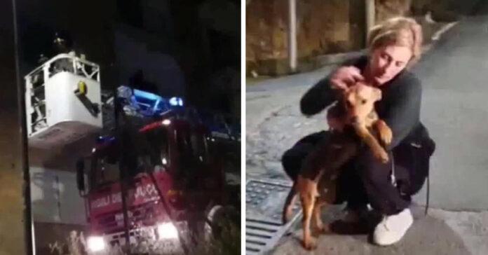 Cane abbandonato su un balcone salvato dai vigili del fuoco