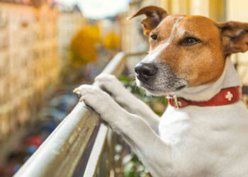 Cane affacciato ad un balcone