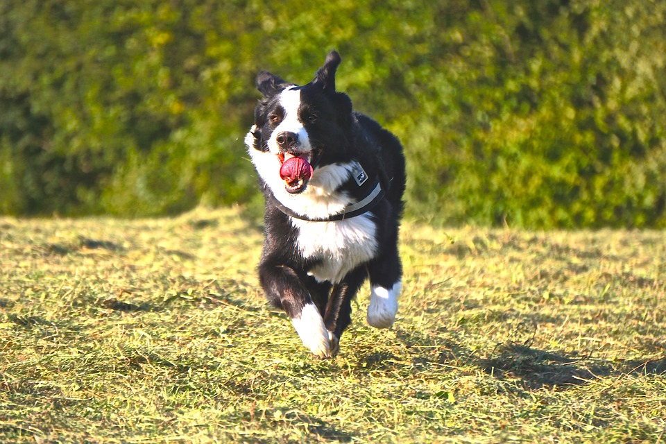Cane che corre