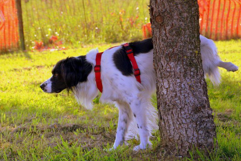 Cane che fa pipì su un albero