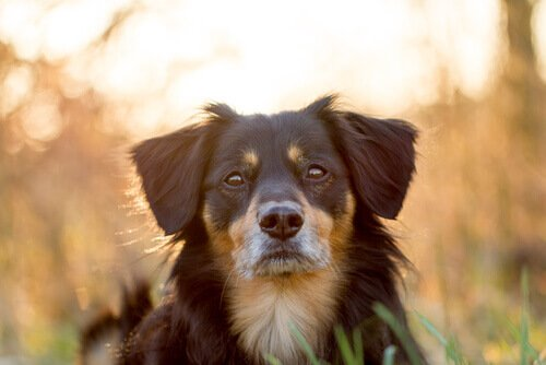 Vero o no: i cani avvertono il terremoto prima che avvenga?