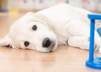 Cane che guarda una clessidra