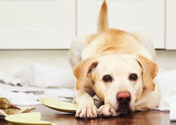 Cane che ha combinato dei guai
