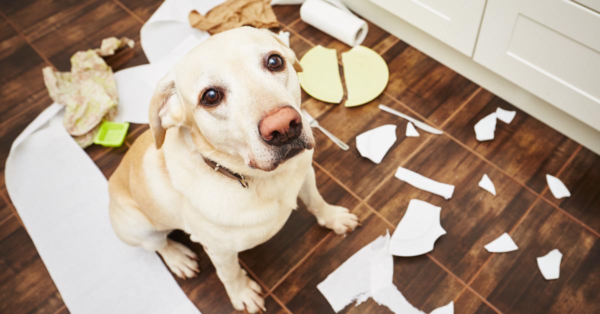 insegnare al cane a non mangiare l'immondizia