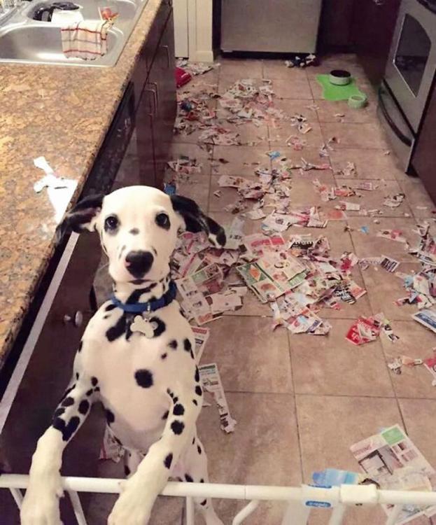 Cane che ha distrutto la casa